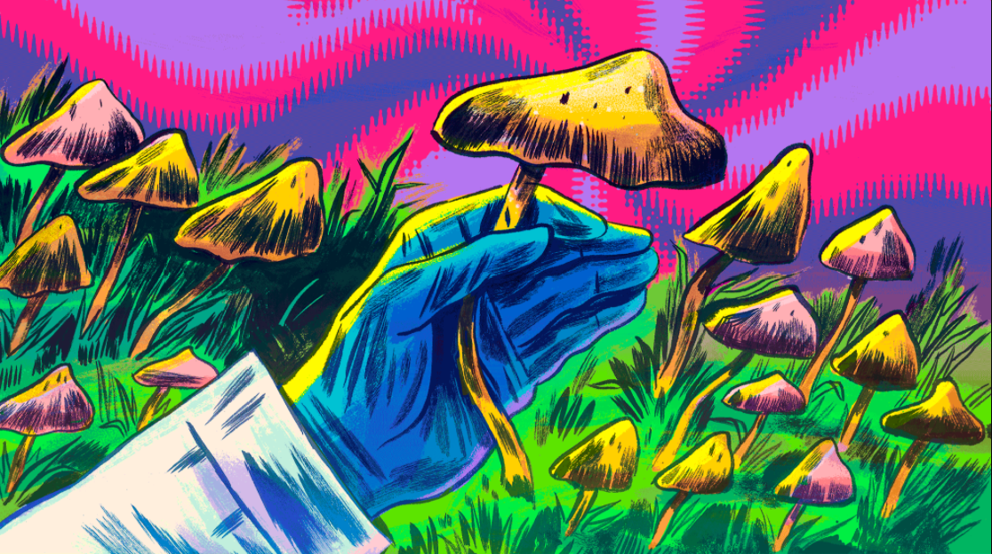 Interview with Deus, a Darknet Vendor of DMT and Psychedelic Mushrooms